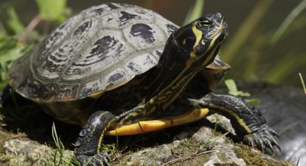 Specie invasive: una crescente minaccia per la biodiversità e una sfida per la comunicazione