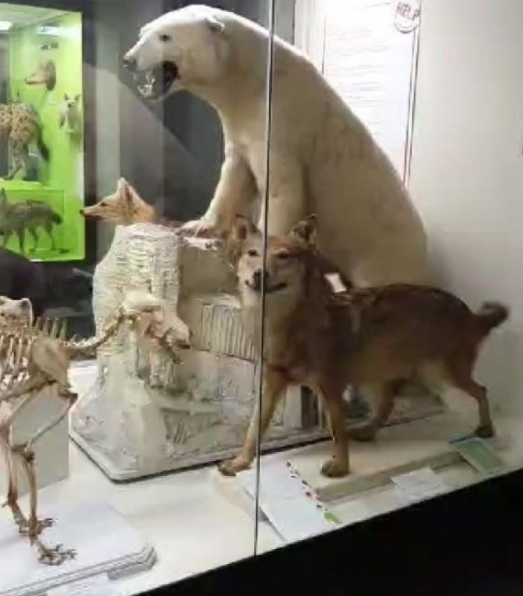 Visita virtuale al museo!