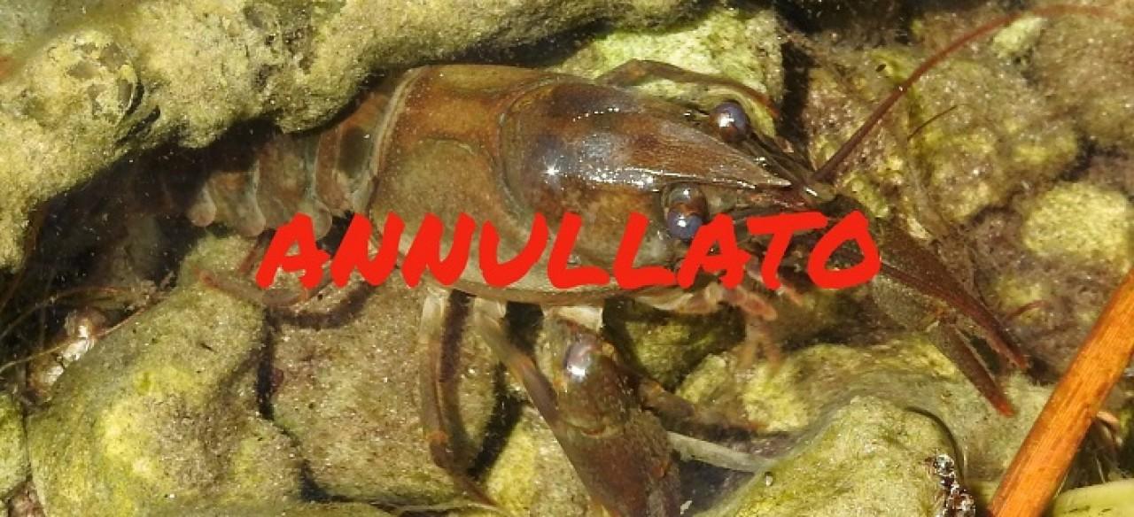 RETTIFICA_Rimandato a data da destinarsi_Il gambero di fiume agli incontri al Museo per parlare di fauna