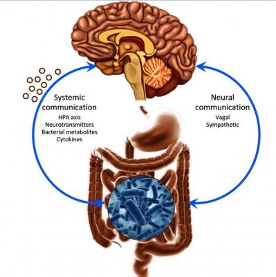 Flora batterica intestinale e funzioni cerebrali