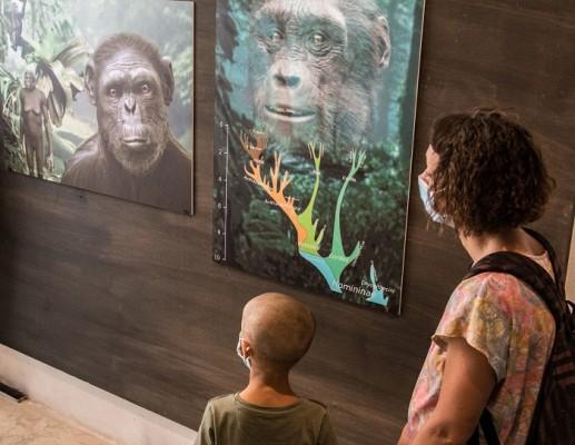 A grande richiesta l'iniziativa VIAGGIO NELLA PREISTORIA si replica il 17 agosto al Museo di Storia Naturale dell'Accademia dei Fisiocritici