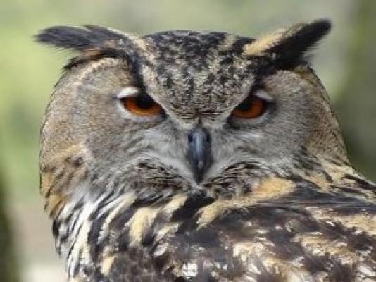 Predatori in volo … vertebrati volanti della notte