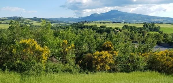 Territorio rurale fra tutela e valorizzazione: esperienze e proposte