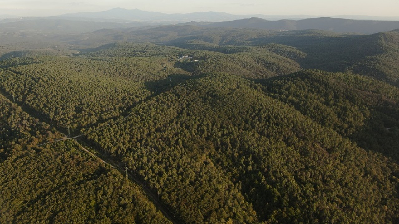 Comunità naturali: tesori di biodiversità