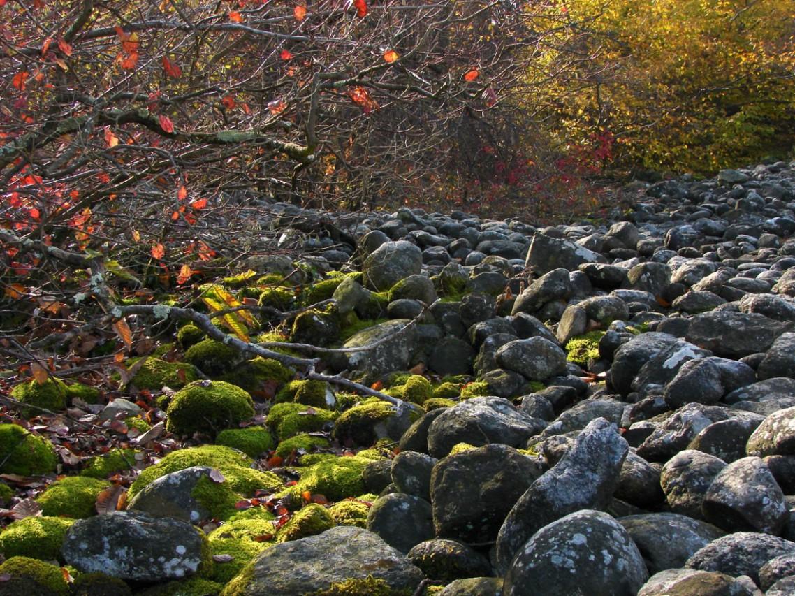 Foliage 2015: i colori dell'autunno nel Biellese