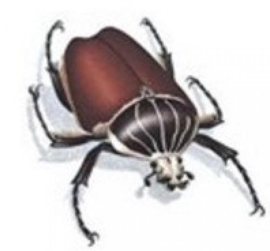 Lezioni di Entomologia