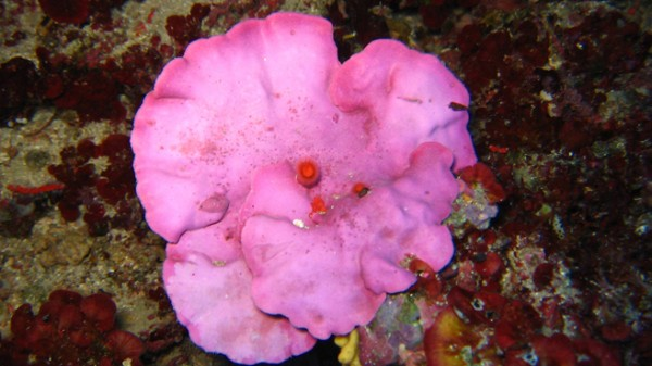 Cromatismi marini del Levante ligure
