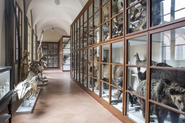 Aperture straordinarie del Museo di Storia Naturale e iniziative su prenotazione