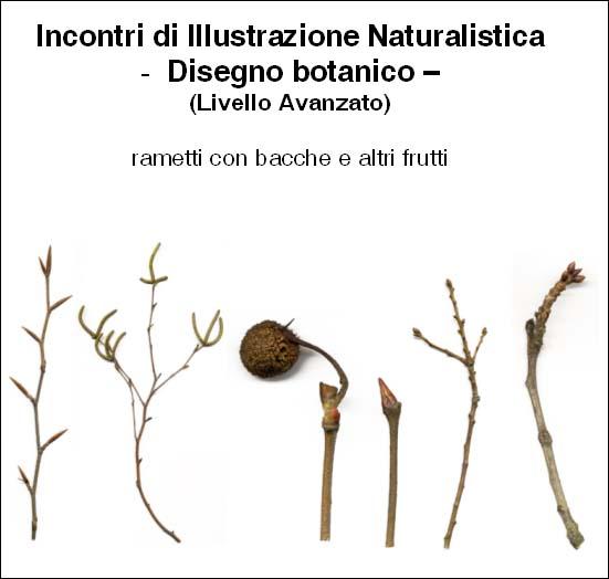 Incontri di Illustrazione Naturalistica
