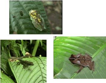 Biodiversità globale ricchezza universale