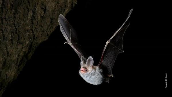 Incontri al MUSE per parlare di fauna - Focus sul mondo dei pipistrelli