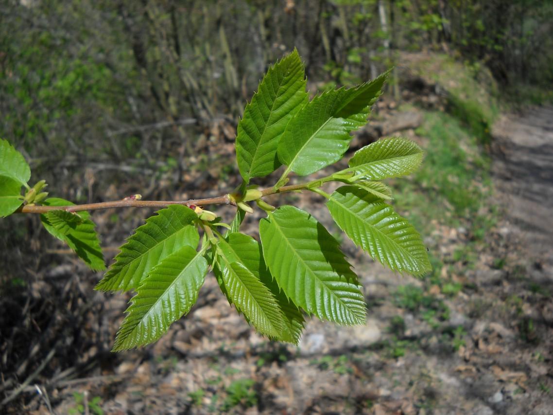 L'altra primavera. Di ramo in ramo